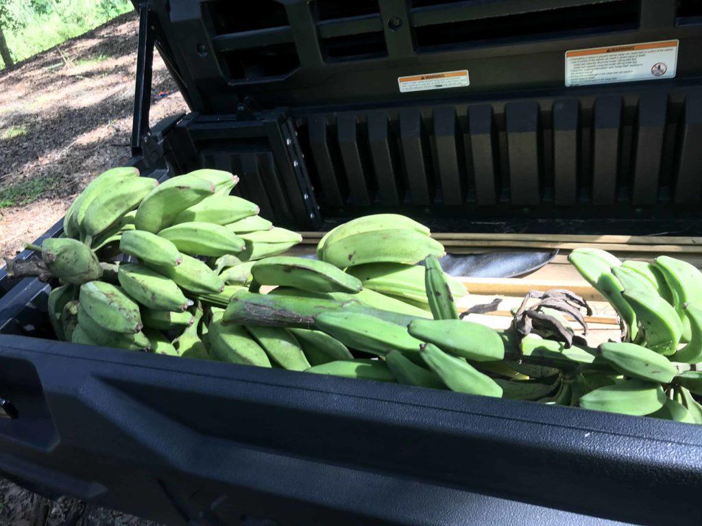 BSP Bananas